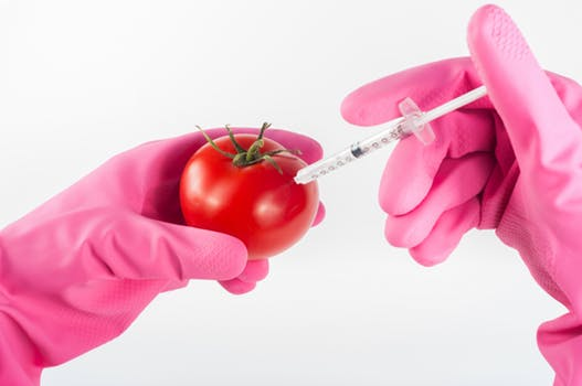 Hands in rubber gloves practising the non-surgical facelift by injecting liquid into a tomato.